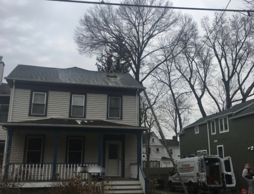 Roof Cleaning of a Home in Nyack, New York