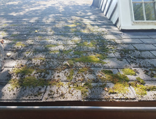 Is Moss on a Roof Harmful? Yes, It Is – Here's Why